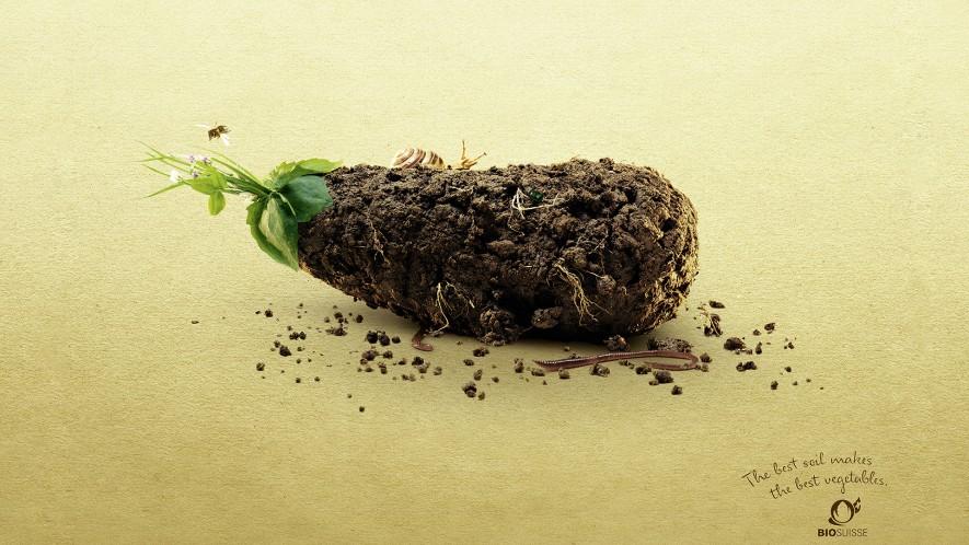 bio-suisse-earthy-veggies_eggplant